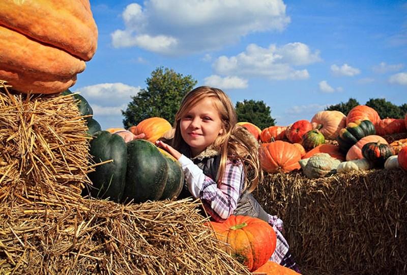 Richfield Pumpkin Patch Extravaganza