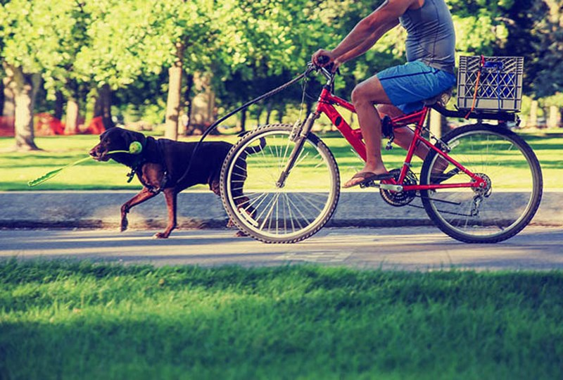 Minneapolis great for bicyclists