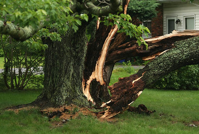 Storm damage from tree