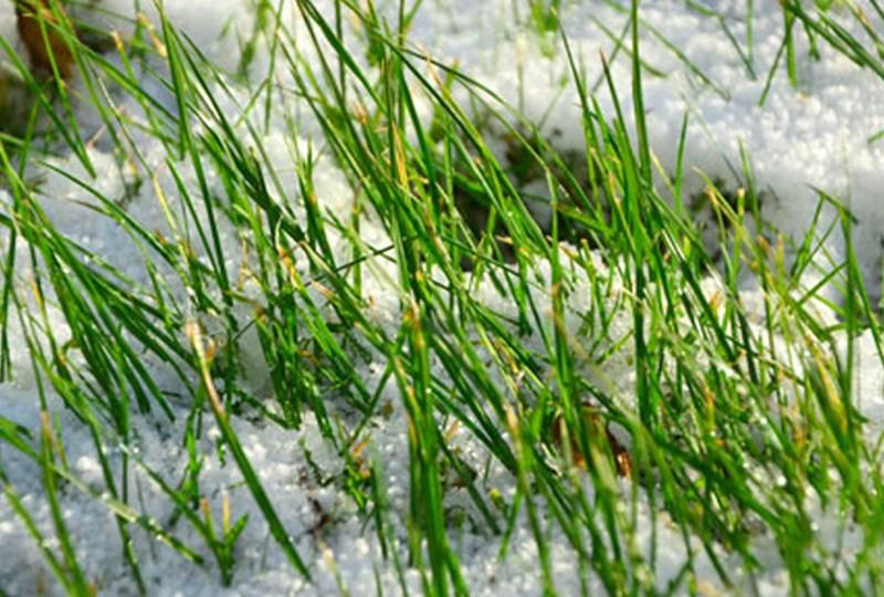 Spring lawn care tips polar vortex