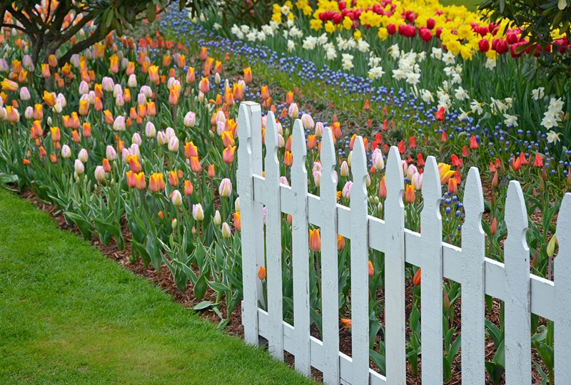 White picket fence on property