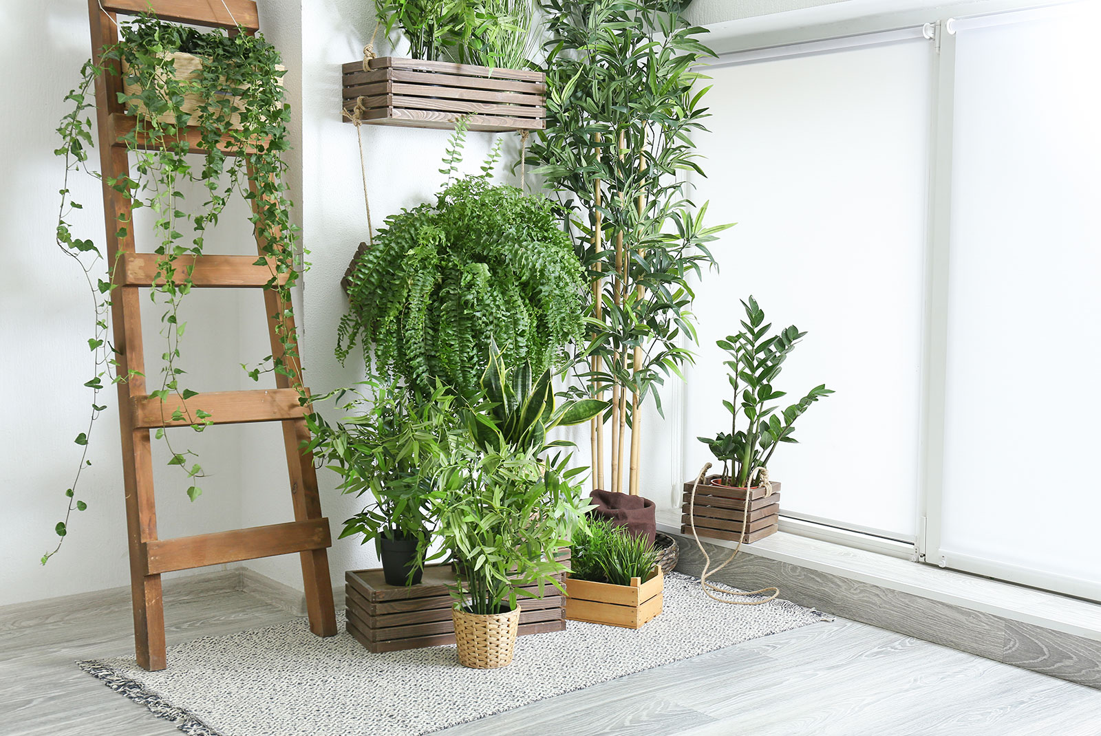 House plant wall