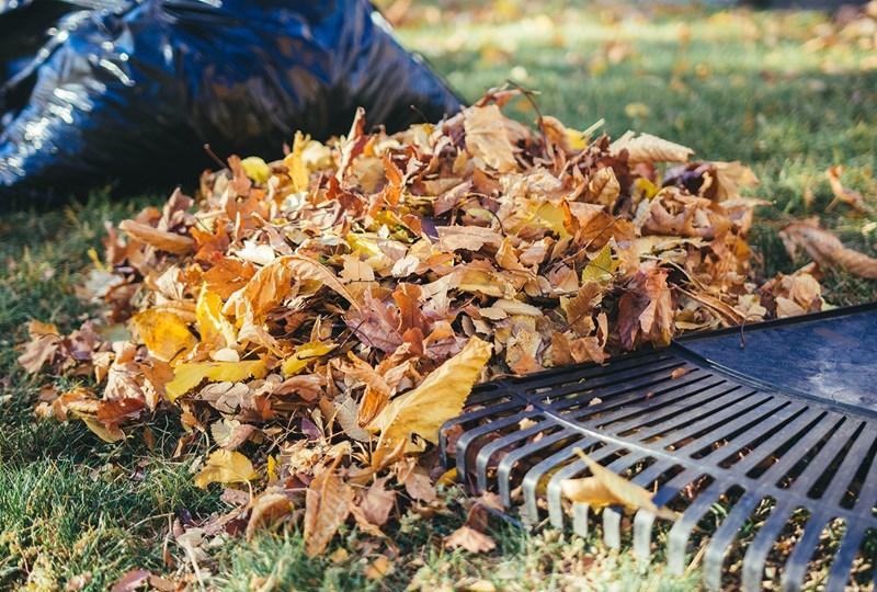 Fall leaf disposal